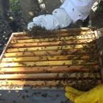 apicultura emepa4