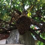 apicultura emepa6