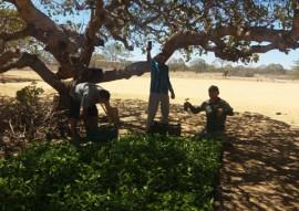 emater gov quer expandir as culturas do caju e maracuja na Paraiba 1 270x191 - Governo promove expansão de culturas do caju e maracujá na Paraíba