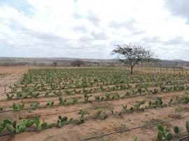 procase iica1 270x202 - Representante do IICA no Brasil visita comunidades rurais da Paraíba atendidas pelo Procase