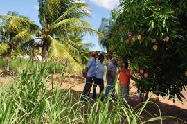 DSC 0567 270x179 - Produção familiar de agricultores é destaque na zona rural de Pilar
