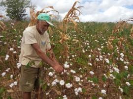 algodao3 02 03 ok 270x202 - Governo do Estado leva tecnologia do Algodão Paraíba à Colômbia