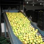 emp135 150x150 - Maioria dos produtos comercializados na Empasa é produzida no Nordeste