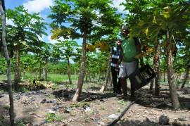 indiginas DSC 0296 270x179 - Governo mobiliza indígenas para conduzir projetos produtivos rurais
