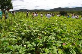 DSC 0981 270x180 - Projeto Algodão Paraíba é destaque internacional
