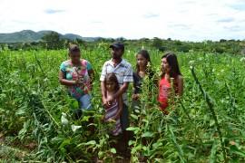 DSC 1021 270x180 - Projeto Algodão Paraíba é destaque internacional