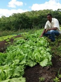 Hortaliças Bonfim 30 05 202x270 - Governo do Estado discute agroecologia na agricultura familiar