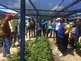 agricultores mudas 25 05 270x202 - Agricultores conhecem pesquisa sobre produção de mudas da Emepa