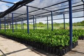agricultores mudas 4 25 05 270x179 - Agricultores conhecem pesquisa sobre produção de mudas da Emepa