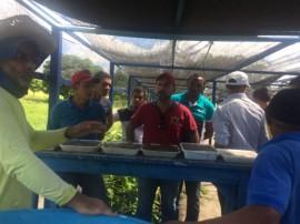 agricultores mudas2 25 05 270x202 - Agricultores conhecem pesquisa sobre produção de mudas da Emepa