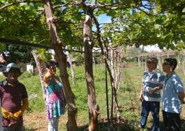 emater gerente sucesso irrigando uva em triunfo no sertao 2 270x191 - Agricultor aumenta renda irrigando uva no Sertão