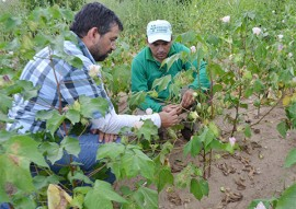 governo estimula debate sobre agroecologia no territorio da borborema 2 270x191 - Governo estimula debate sobre agroecologia no Território da Borborema