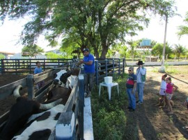 vacinação gado3 270x202 - Sedap e Emater mobilizam criadores para atingir 100% de vacinação do rebanho contra febre aftosa