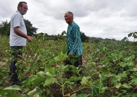 dia do campo cultivo de algodao 3 270x191 - Governo da Paraíba realiza o maior dia de campo de algodão agroecológico do Brasil