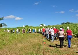 dia do campo cultivo de algodao 6 270x191 - Governo da Paraíba realiza o maior dia de campo de algodão agroecológico do Brasil
