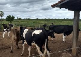 sedh monitoramento do programa do leite na paraiba (6)