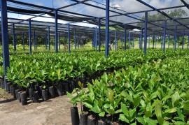 DSC 1005 270x179 - Governo incentiva a revitalização do caju na Paraíba