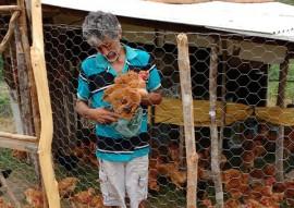 agricultores de alagamar assistidos pela emater criam frango caipira 1 270x191 - Agricultores de Alagamar assistidos pela Emater passam a criar frango caipira
