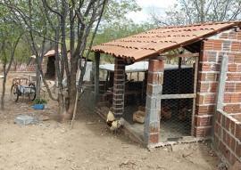 agricultores de alagamar assistidos pela emater criam frango caipira 2 270x191 - Agricultores de Alagamar assistidos pela Emater passam a criar frango caipira
