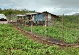 agricultores de alagamar assistidos pela emater criam frango caipira 5 270x191 - Agricultores de Alagamar assistidos pela Emater passam a criar frango caipira