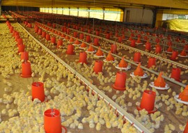 emater grupo de agricultor de baixo carbonovisita frigorifico guaraves 2 270x191 - Grupo gestor do plano estadual de agricultura de baixo carbono visita frigorífico Guaraves