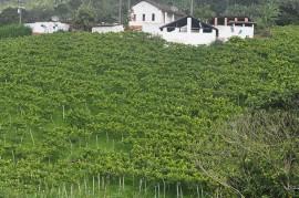 DSC0033 270x179 - Governo discute cultivo e produção de uva com agricultores de Natuba