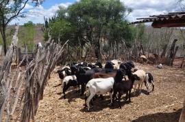 Patos2 03 08DSC 0263 270x179 - Projetos produtivos renovam a esperança de famílias agricultoras assentadas no Sertão