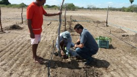 Pitaya3 270x152 - Famílias de Várzea cultivam pitaya e hortaliças com energia solar