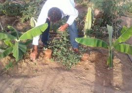 Procase irrigacao com potes de barro 1 270x191 - Unidade de Aprendizagem do Procase desenvolve irrigação utilizando potes de barro