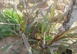 Procase irrigacao com potes de barro 2 270x191 - Unidade de Aprendizagem do Procase desenvolve irrigação utilizando potes de barro