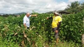 emater alagoa grande produz 240 toneladas de fava 6 270x152 - Assistência da Emater contribui na produção de 240 toneladas de fava em Alagoa Grande