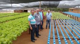 hidroponia 31 08 270x151 - Emater orienta produção de hortaliças com hidroponia para uso racional de água