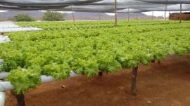hidroponia2 31081 270x151 - Emater orienta produção de hortaliças com hidroponia para uso racional de água