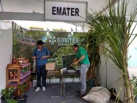 primenta 1 270x202 - Curso sobre aproveitamento da pimenta e do abacaxi estará na programação da Ruralfest e Festa do Cordeiro