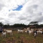 Procase cariri ocidental recebe assistencia tecnica para 665 familias da regiao (5)