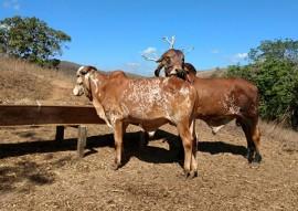 emater dia de campo bivinocultura leiteira vale rio do peixe 2 270x191 - Dia de campo de bovinocultura leiteira reúne criadores da região do Vale do Rio do Peixe com apoio da Emater