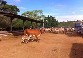 emater dia de campo bivinocultura leiteira vale rio do peixe 3 270x191 - Dia de campo de bovinocultura leiteira reúne criadores da região do Vale do Rio do Peixe com apoio da Emater