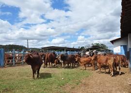 emater dia de campo bivinocultura leiteira vale rio do peixe 4 270x191 - Dia de campo de bovinocultura leiteira reúne criadores da região do Vale do Rio do Peixe com apoio da Emater