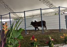 emepa leilao de bovino supera expectativas na 50 expofeira 1 270x191 - Leilão de bovinos da Emepa durante a 50ª Expofeira da Paraíba supera expectativa