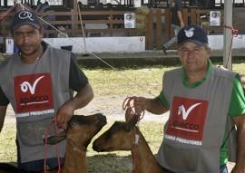 exposicao de animais caprinocultura raca boer 11 270x191 - Expofeira Paraíba Agronegócios: Aberta Exposição Nacional da raça Boer