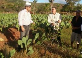 pesquisa e extensao se unem para cultivo de umbu 1 270x191 - Pesquisa e extensão se unem para incentivar cultivo de umbu na Paraíba