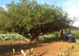 pesquisa e extensao se unem para cultivo de umbu 4 270x191 - Pesquisa e extensão se unem para incentivar cultivo de umbu na Paraíba