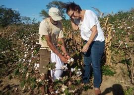 workshop de cultivo do algodao colorido 6 270x191 - Governo e Norfil S/A impulsionam cultivo do algodão orgânico e promovem workshop para estimular agricultor