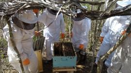 Apiario Alagamar4 270x151 - Emepa e Emater implantam apiário no Projeto Ecoprodutivo em Alagamar