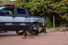 FOTO WAGNER VARELA 270x180 - Polícia vai utilizar cães farejadores nas operações de fim de ano na Paraíba