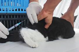 RicardoPuppe Dia D Vacina Raiva 21 270x179 - Mais de 350 mil cães e 115 mil gatos já foram vacinados contra a raiva animal na Paraíba este ano