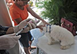 RicardoPuppe Dia D Vacina Raiva 6 270x189 - Cachorros e gatos são vacinados contra a raiva animal em toda a Paraíba