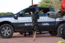 WAGNER VARELA SECOM 270x180 - Polícia vai utilizar cães farejadores nas operações de fim de ano na Paraíba