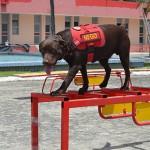 corpo de bombeiros adquire equipamentos para caes (1)