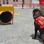 corpo de bombeiros adquire equipamentos para caes (6)